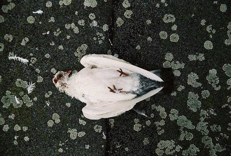 02_16-Bearbeitet.tif