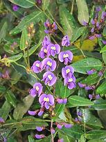 Naturopath, Naturopathy, australian bush flower essences, holistic healing