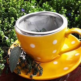 herbal Medicine, health, southwest, herbal tea, herbal infusion, grow your own medicine
