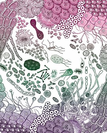 microbiotia, gut health, gut healing, GAPS, microflora, gut-brain connection