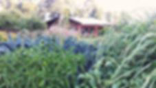 web IMAG0284_1.jpg