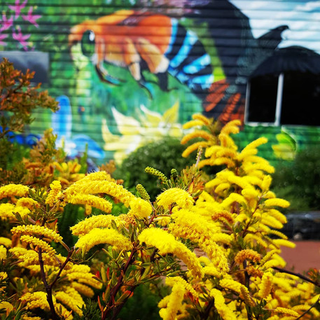 Biodiversity mural at Greenbushes Community Garden