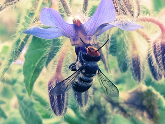 In love with bees