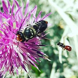 native bees, Naturopath, Naturopathy, native bee hotel, insectary garden