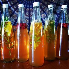 kombucha gut health fermented