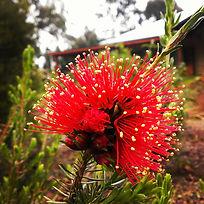 Naturopath, Naturopathy, australian bush flower essences, holistic healing,