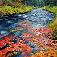 Metolius-River.jpg