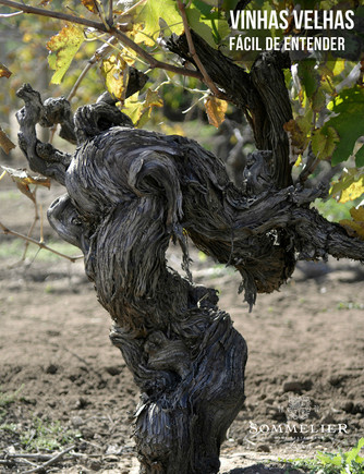 Vinhas Velhas / Old Vines