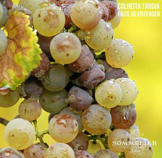Colheita Tardia / Late Harvest