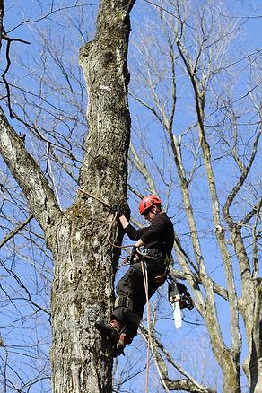 Émondage Lanaudière- arboriculteur certifié