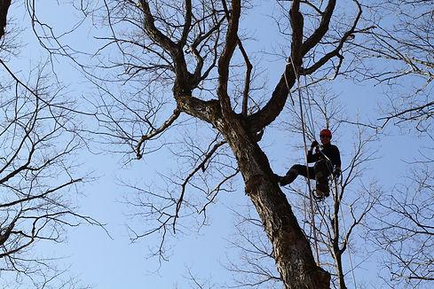 Émondage Lanaudière- arboriculteur