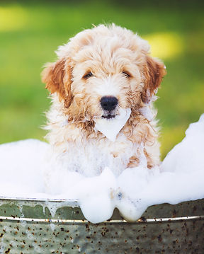 Adorable Cute Young Puppy Outside in the