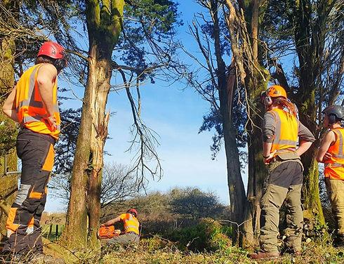 Tree felling Cornwall