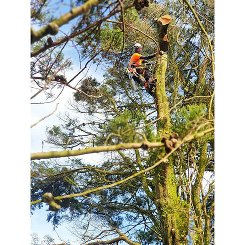 Tree contractor Cornwall