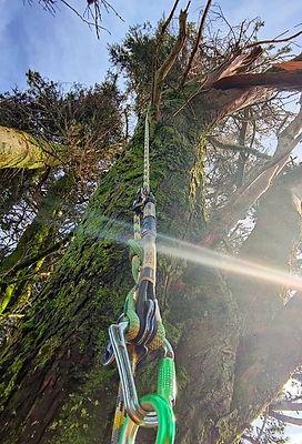 Tree Trimming Cornwall