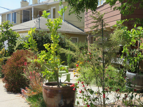 a 'living fence' separates garden and patio from the sidewalk