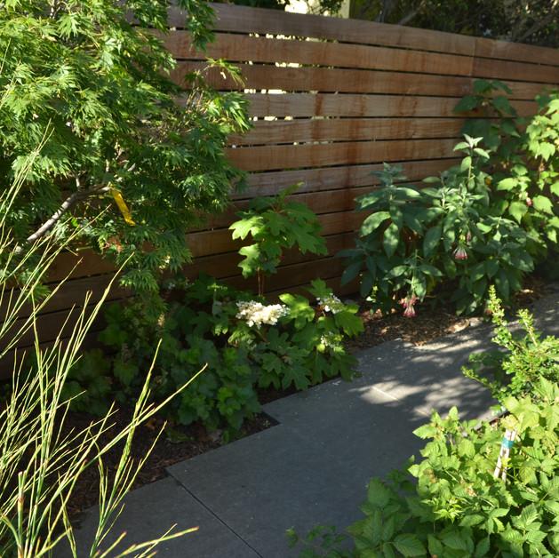 green walk from sun to shade