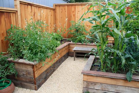 redwood veggie beds