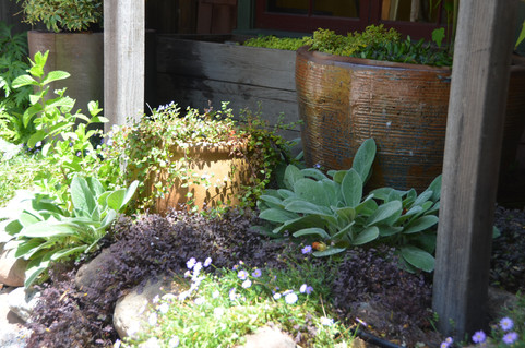healing garden walk, soft colors and textures