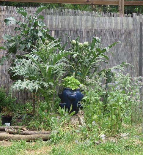 collard tree and artichoke, borage and alpine strawberry pot