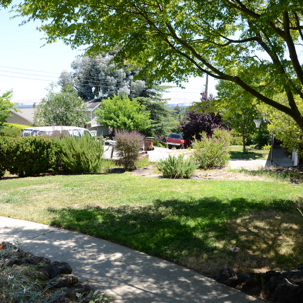 lawn and perimeter bed 'before'