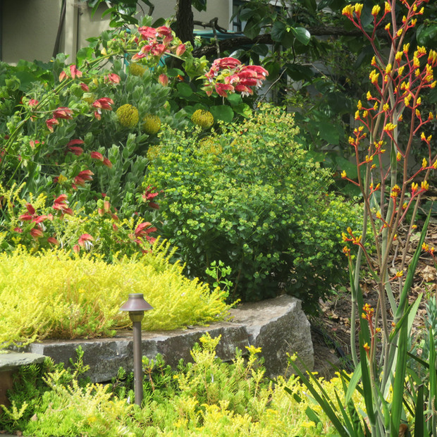 a palette of green, chartreuse, gold and burnt orange gently stands out against the house and hardscape colors