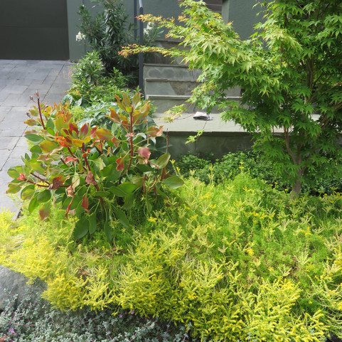 king protea stands out next to japanese maple and sedum foliage