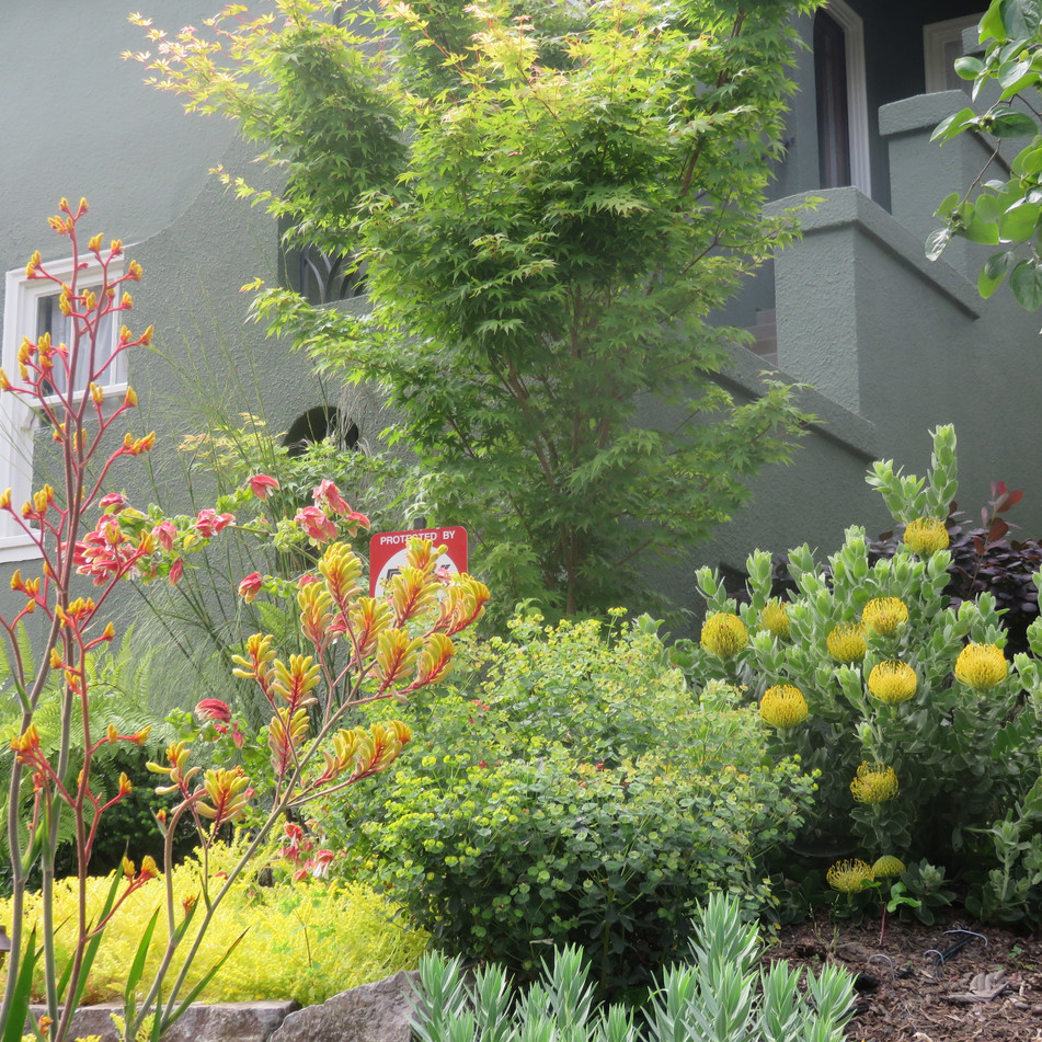 japanese maples and bold plant textures help scale down the house