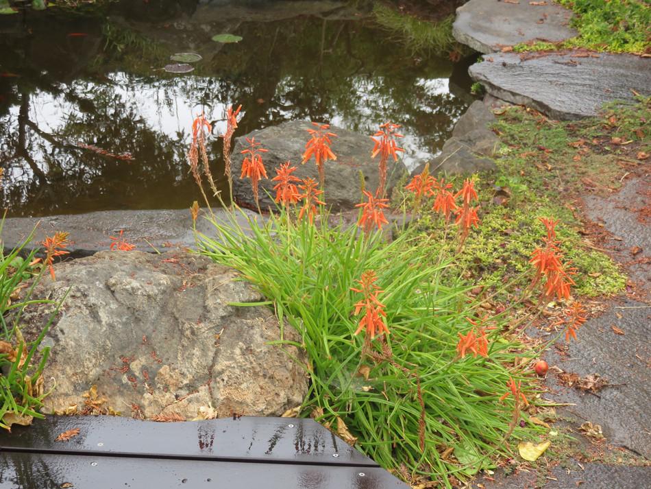 pond walk