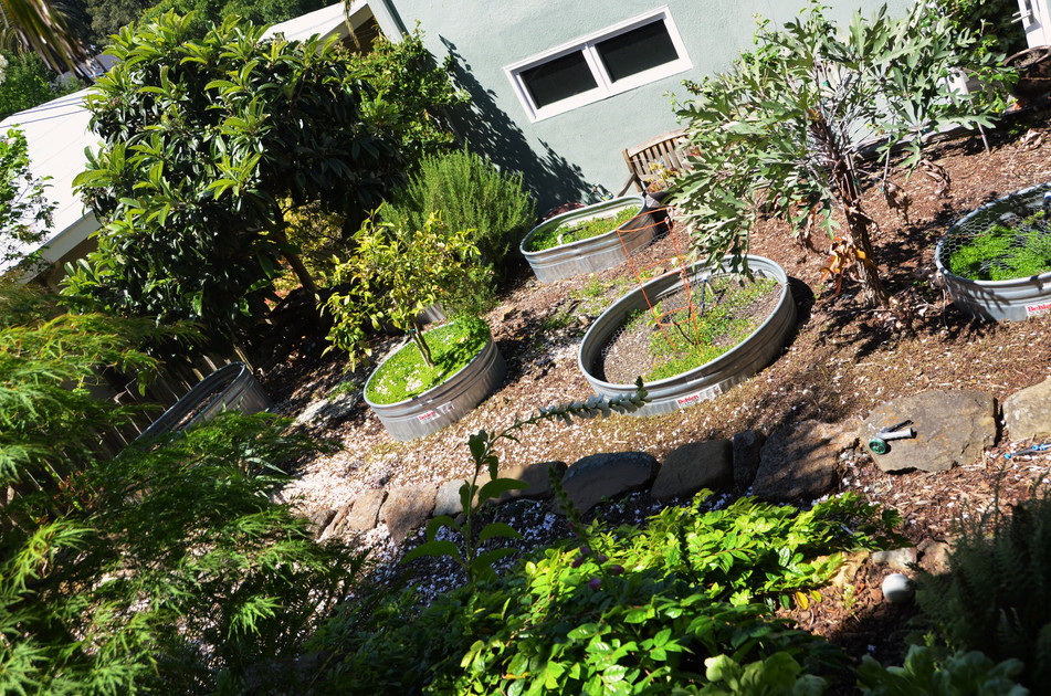 sunken troughs for edible growing