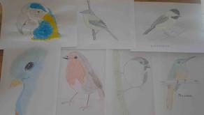 Bird Watching & Drawing