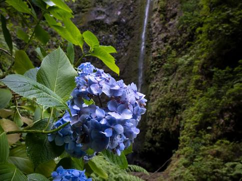 Caldera Verde - Madeira
