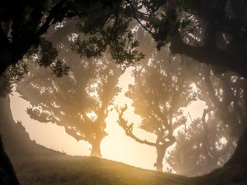 Fanal Sonnenaufgang