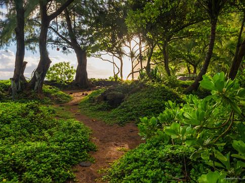 Paradies auf Big Island