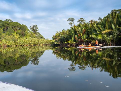Virgin mangrove forest & Borneo Jungle