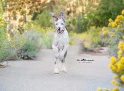 Great Dane puppy Esme