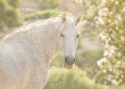Wild mare back lit by the sun
