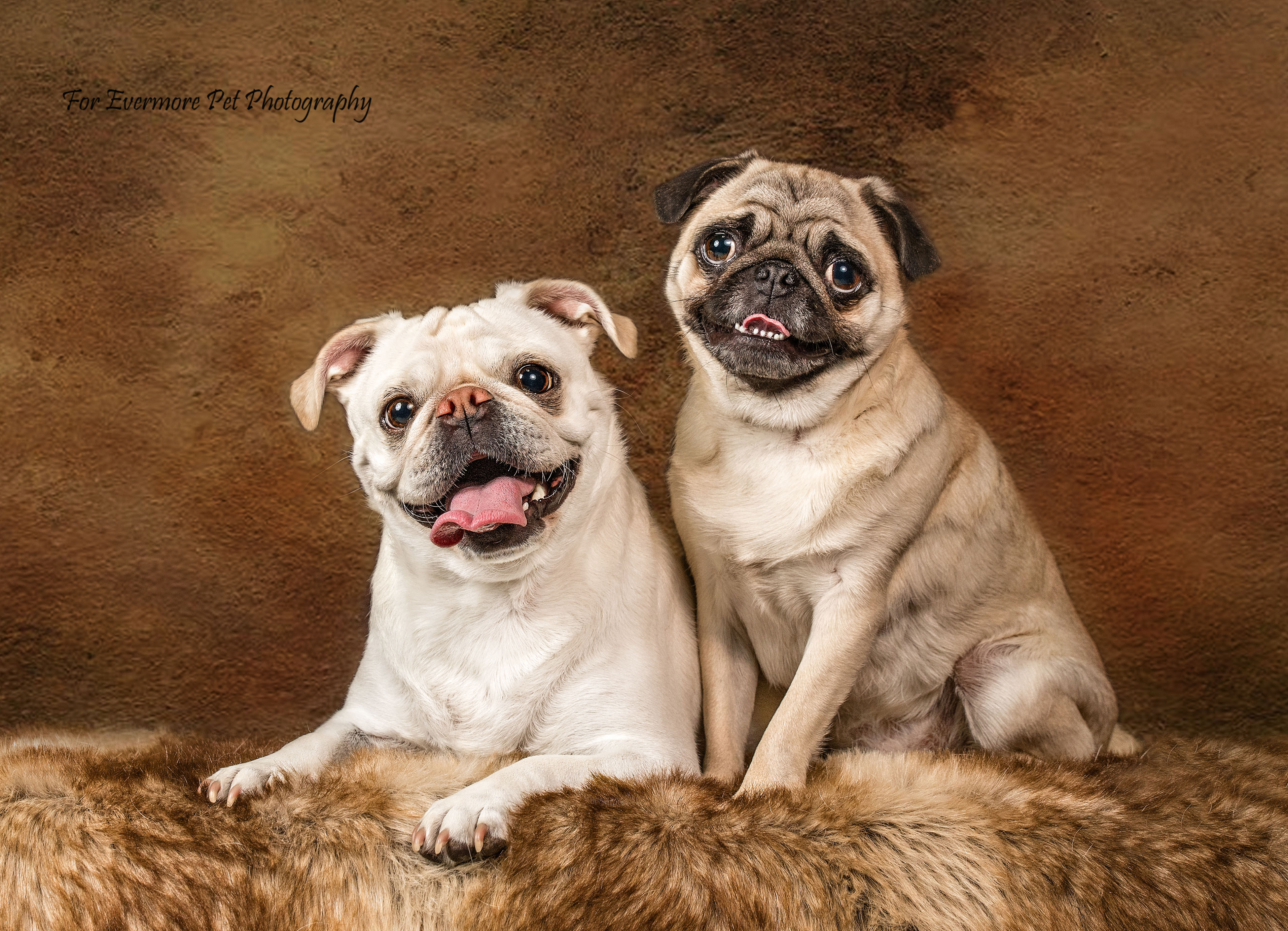 Benny and Bailey the Pugs