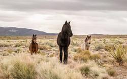 Family of wild horses