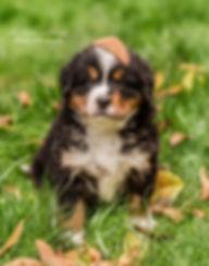 pups-3600 fb.jpg