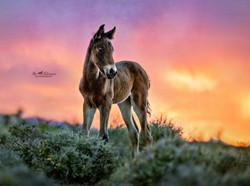 round a week old wild colt