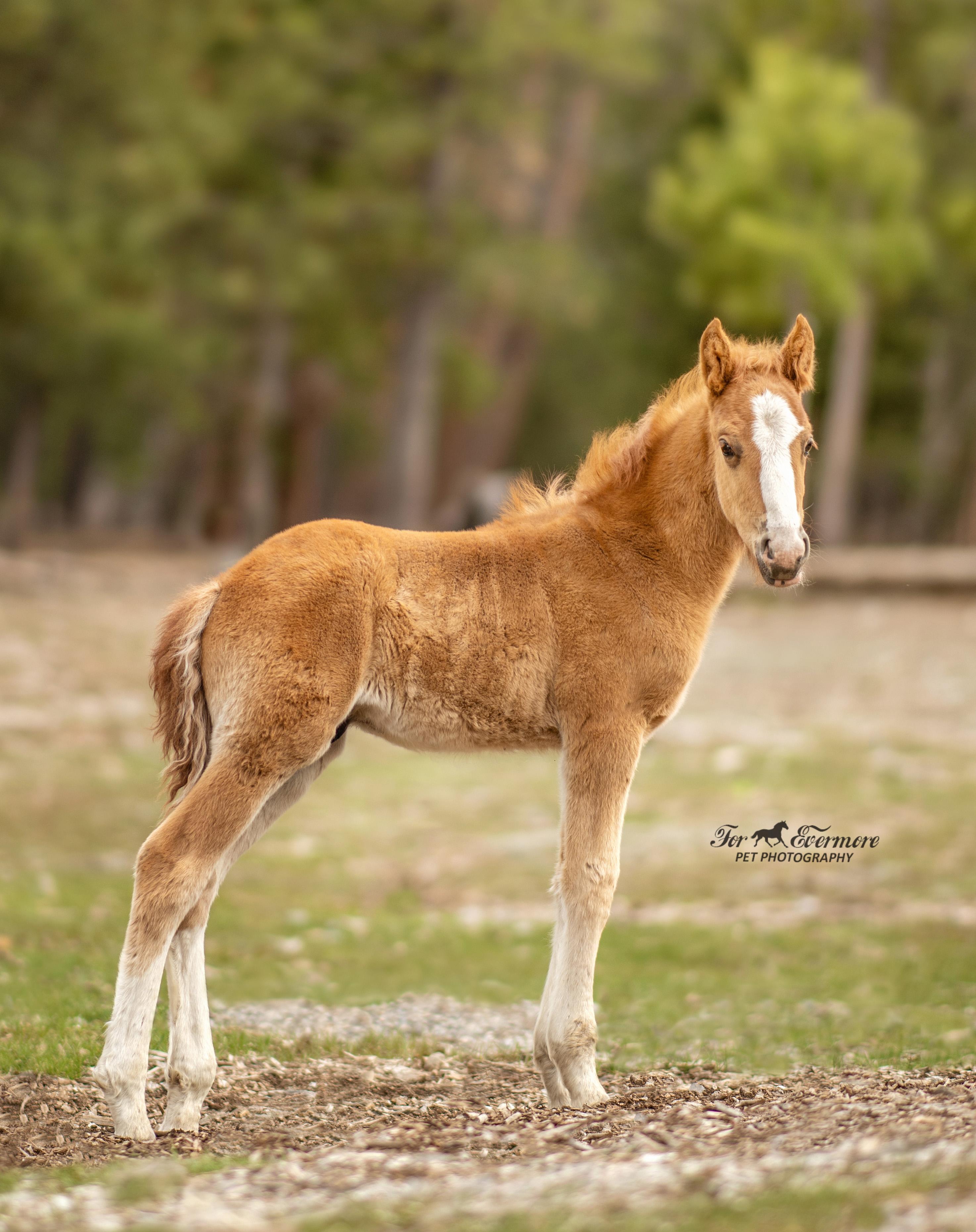 3 week old colt