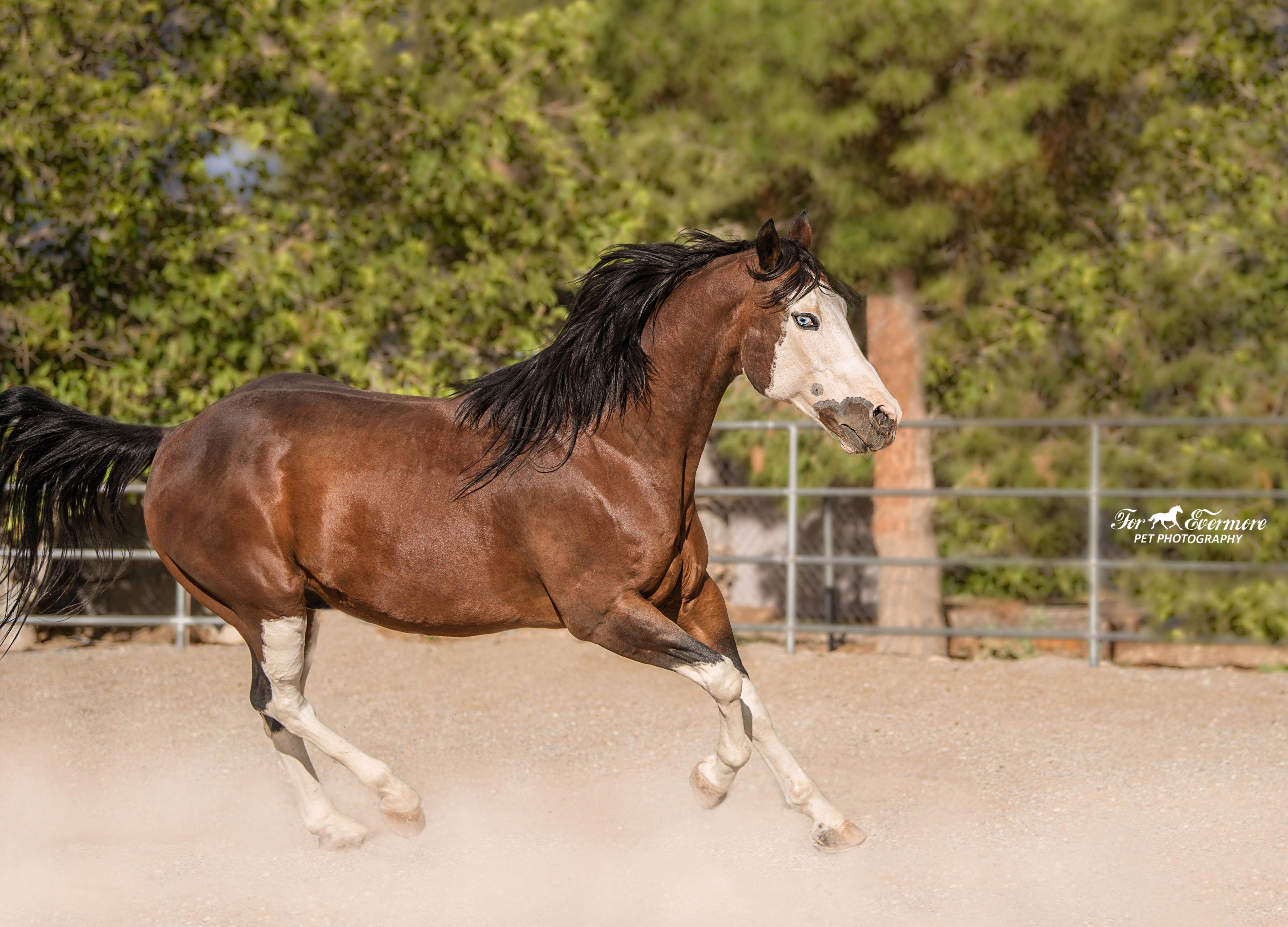 Run Apache