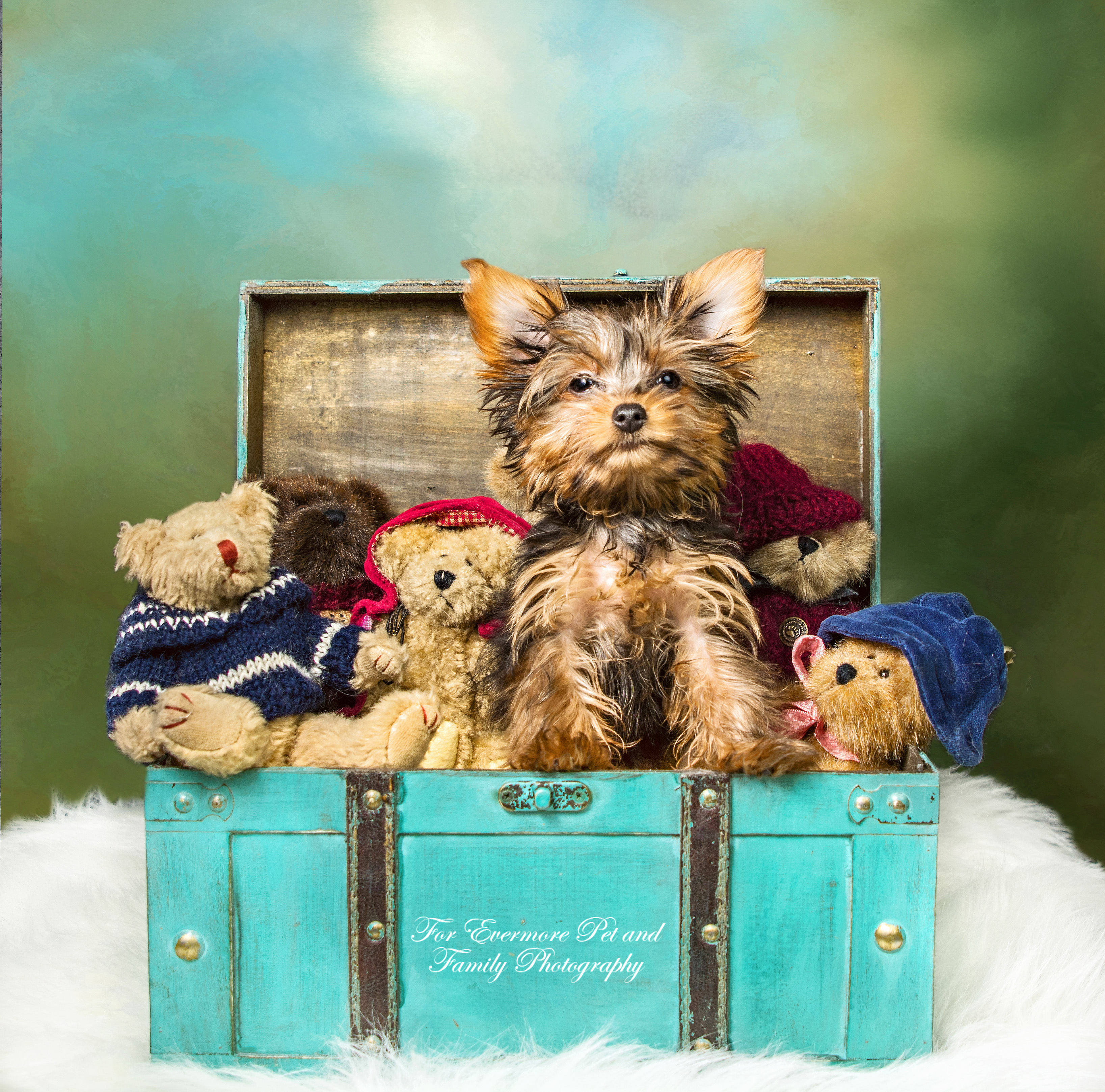 Puppy Teddy and his bear friends