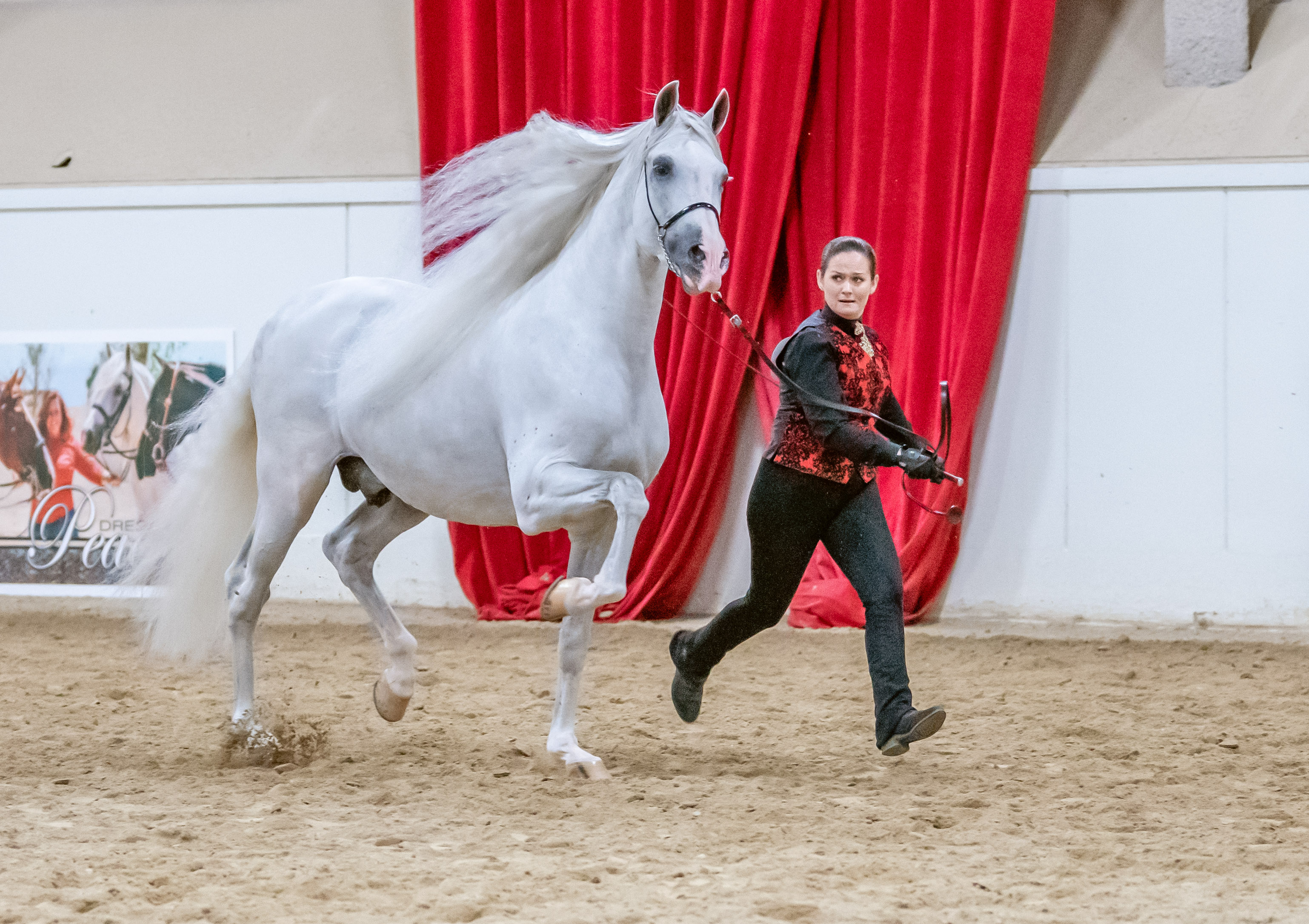 Andalusian World Cup show