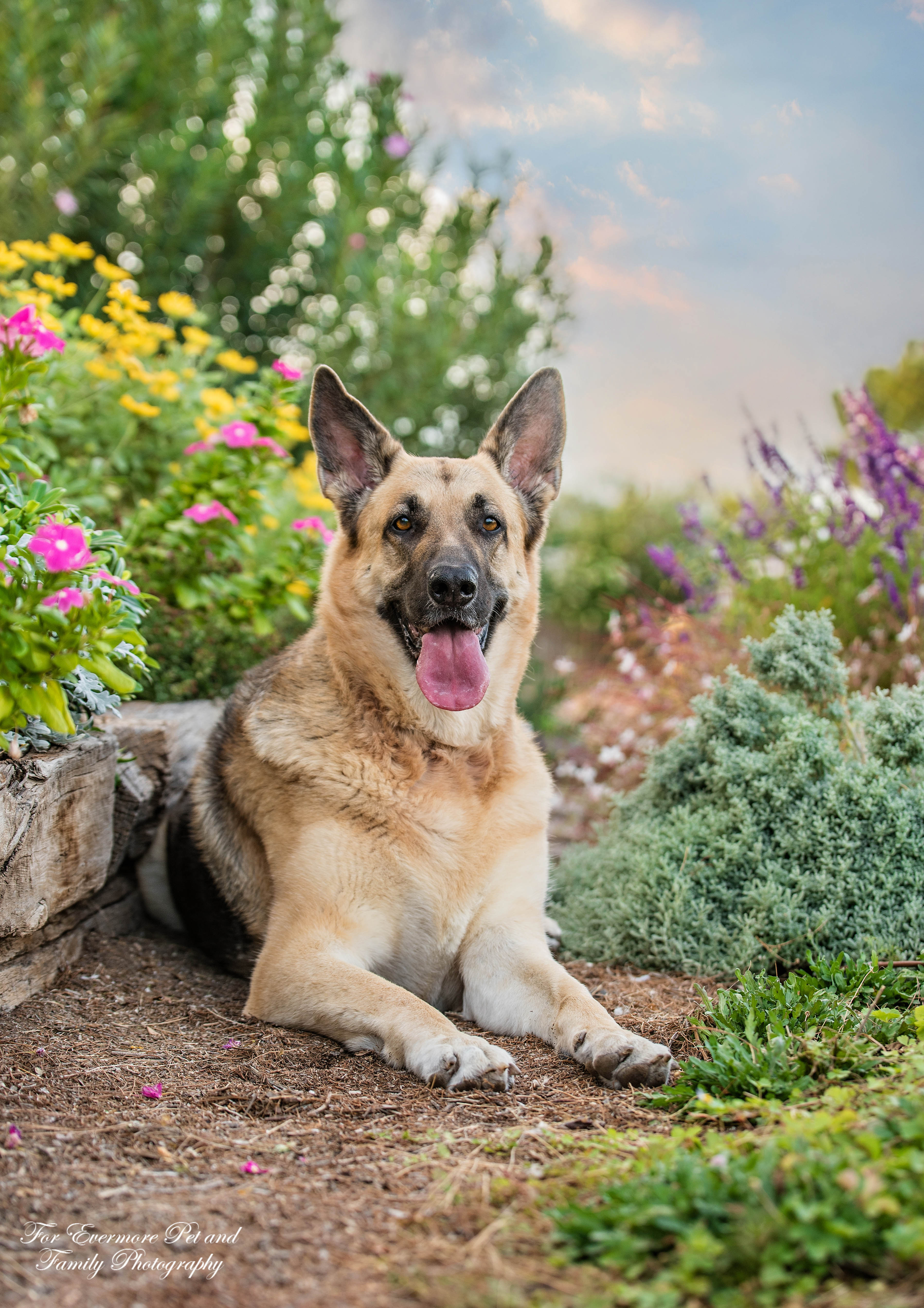 German Shepherd Princess