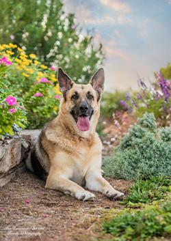 German Shepherd Princess