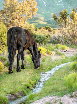 Black stallion by the creek