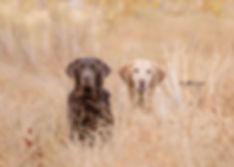 pup-3468 crop fave1.jpg