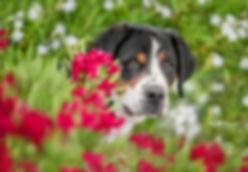 pup new-1062  fb eye.jpg